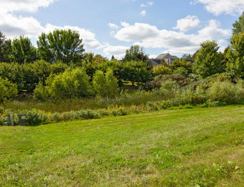 Vacant Lot Purchase Benefits Owners